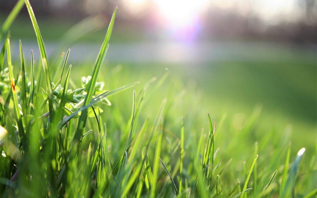 Gras of kunstgras in de tuin?